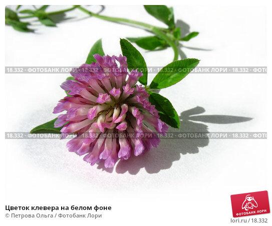 Цветок клевера на белом фоне, фото № 18332, снято 14 сентября 2006 г. (c) Петрова Ольга / Фотобанк Лори