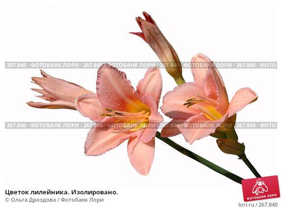 Купить «Цветок лилейника. Изолировано.», фото № 267840, снято 11 августа 2006 г. (c) Ольга Дроздова / Фотобанк Лори