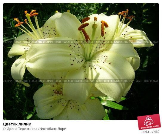 Цветок лилии, эксклюзивное фото № 460, снято 1 августа 2004 г. (c) Ирина Терентьева / Фотобанк Лори