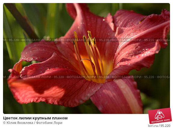 Цветок лилии крупным планом, фото № 95220, снято 24 августа 2006 г. (c) Юлия Яковлева / Фотобанк Лори