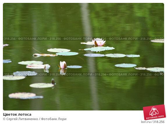 Цветок лотоса, фото № 318256, снято 8 июня 2008 г. (c) Сергей Литвиненко / Фотобанк Лори
