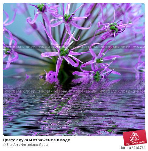 Цветок лука и отражение в воде, фото № 216764, снято 17 января 2017 г. (c) ElenArt / Фотобанк Лори