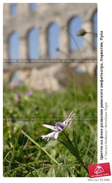 Купить «Цветок на фоне развалин римского амфитеатра, Хорватия, Пула», фото № 31544, снято 5 апреля 2007 г. (c) Tamara Kulikova / Фотобанк Лори