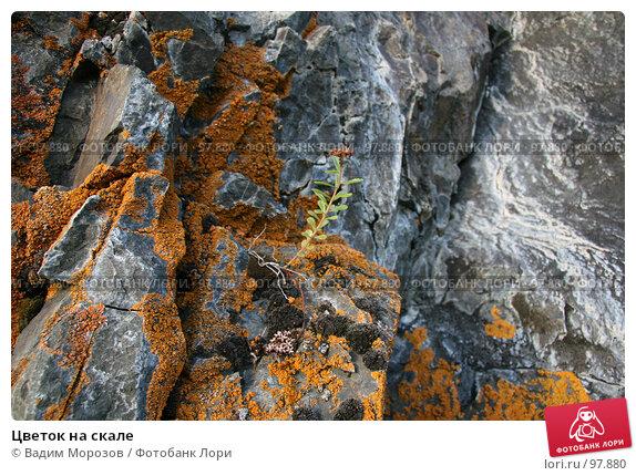Цветок на скале, фото № 97880, снято 28 июля 2007 г. (c) Вадим Морозов / Фотобанк Лори