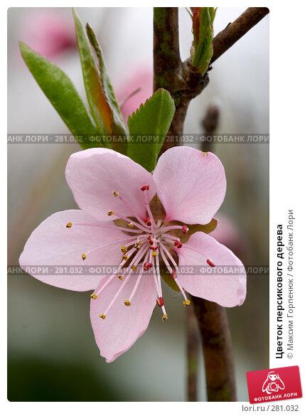 Цветок персикового дерева, фото № 281032, снято 16 апреля 2007 г. (c) Максим Горпенюк / Фотобанк Лори