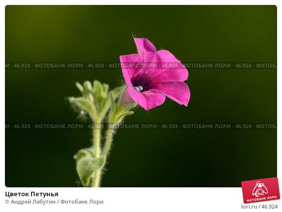 Цветок Петунья, фото № 46924, снято 20 мая 2007 г. (c) Андрей Лабутин / Фотобанк Лори