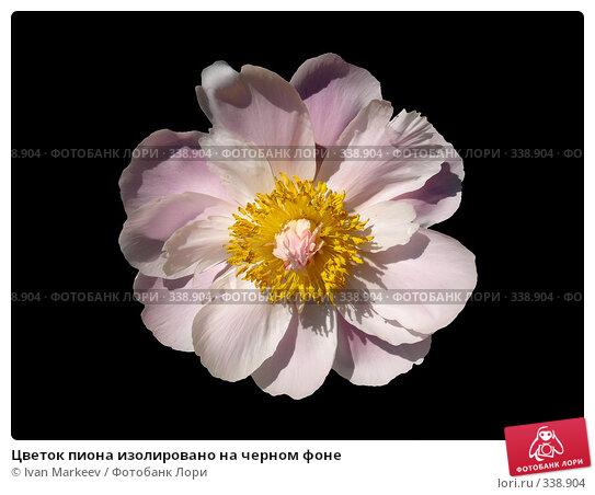 Цветок пиона изолировано на черном фоне, фото № 338904, снято 20 августа 2017 г. (c) Василий Каргандюм / Фотобанк Лори