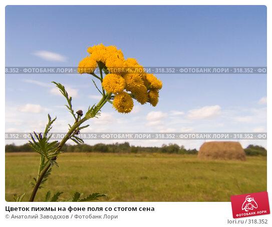 Цветок пижмы на фоне поля со стогом сена, фото № 318352, снято 5 августа 2006 г. (c) Анатолий Заводсков / Фотобанк Лори