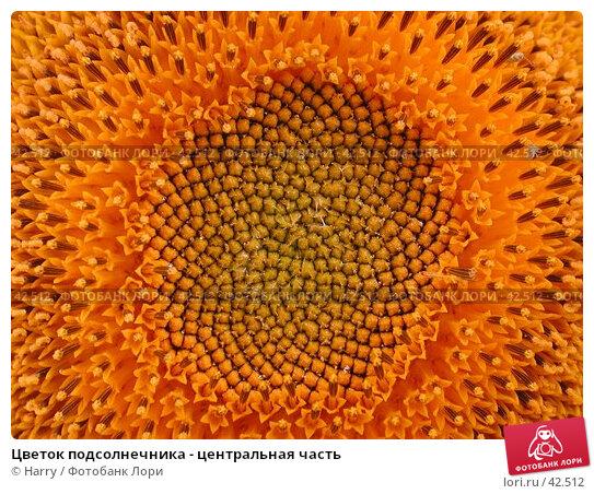 Цветок подсолнечника - центральная часть, фото № 42512, снято 30 июля 2004 г. (c) Harry / Фотобанк Лори