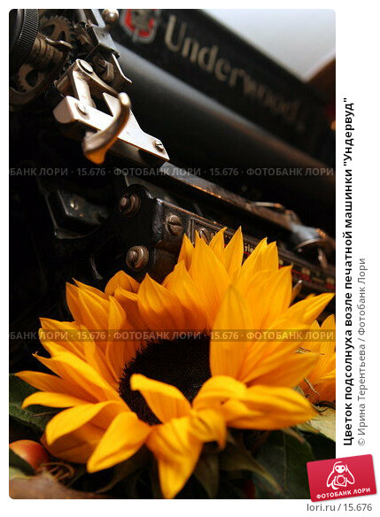 """Цветок подсолнуха возле печатной машинки """"Ундервуд"""", эксклюзивное фото № 15676, снято 21 октября 2006 г. (c) Ирина Терентьева / Фотобанк Лори"""
