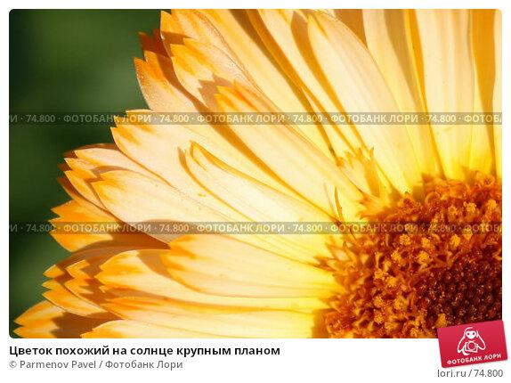 Цветок похожий на солнце крупным планом, фото № 74800, снято 18 августа 2007 г. (c) Parmenov Pavel / Фотобанк Лори