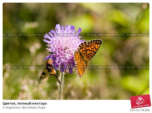 Цветок, полный нектара, фото № 74260, снято 7 июля 2007 г. (c) Argument / Фотобанк Лори