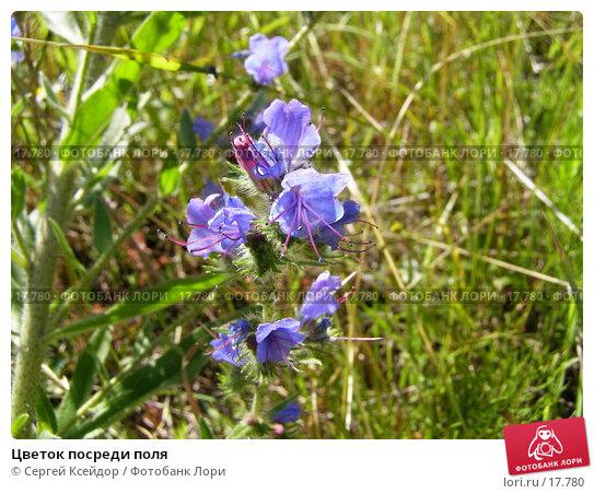 Цветок посреди поля, фото № 17780, снято 6 июля 2006 г. (c) Сергей Ксейдор / Фотобанк Лори