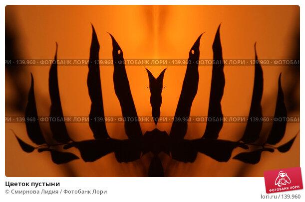 Купить «Цветок пустыни», фото № 139960, снято 22 сентября 2007 г. (c) Смирнова Лидия / Фотобанк Лори
