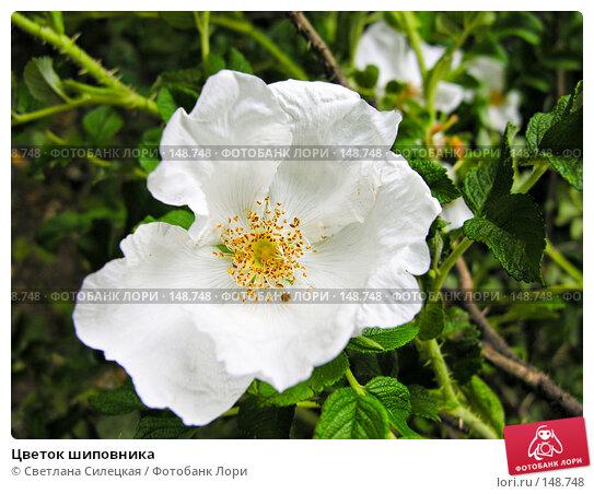 Купить «Цветок шиповника», фото № 148748, снято 12 июня 2007 г. (c) Светлана Силецкая / Фотобанк Лори