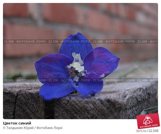 Цветок синий, фото № 22508, снято 19 августа 2006 г. (c) Талдыкин Юрий / Фотобанк Лори