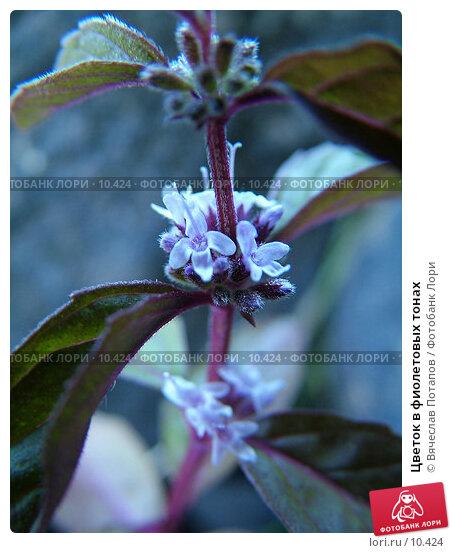 Цветок в фиолетовых тонах, фото № 10424, снято 31 июля 2004 г. (c) Вячеслав Потапов / Фотобанк Лори