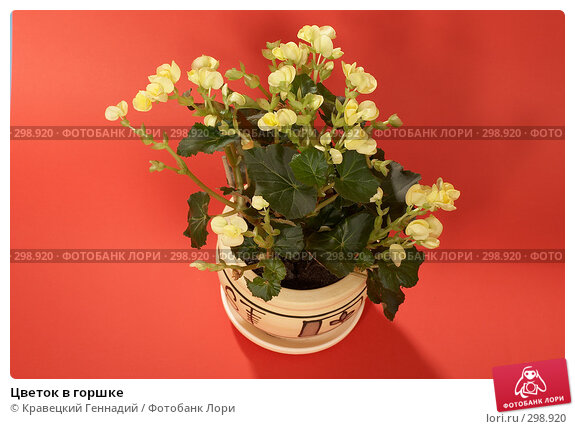 Цветок в горшке, фото № 298920, снято 8 января 2005 г. (c) Кравецкий Геннадий / Фотобанк Лори
