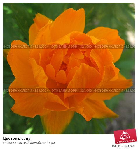 Купить «Цветок в саду», фото № 321900, снято 1 июня 2008 г. (c) Ноева Елена / Фотобанк Лори