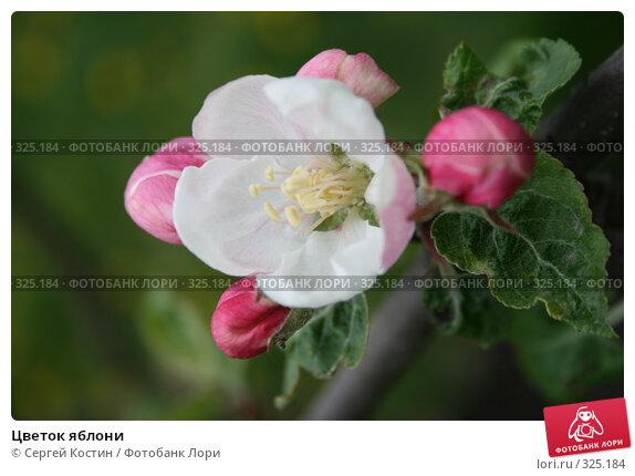 Цветок яблони, фото № 325184, снято 12 июня 2008 г. (c) Сергей Костин / Фотобанк Лори