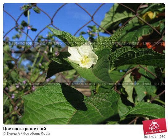 Купить «Цветок за решеткой», фото № 1980, снято 5 февраля 2003 г. (c) Елена А / Фотобанк Лори