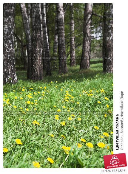Цветущая поляна, фото № 131516, снято 12 мая 2007 г. (c) Коваль Василий / Фотобанк Лори