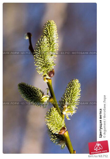 Купить «Цветущая ветка», фото № 63712, снято 30 апреля 2006 г. (c) Argument / Фотобанк Лори