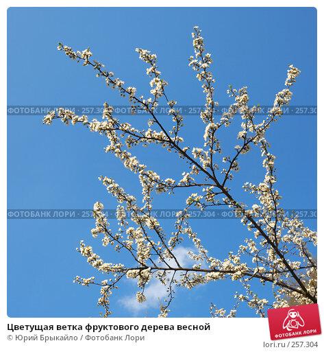 Цветущая ветка фруктового дерева весной, фото № 257304, снято 30 марта 2017 г. (c) Юрий Брыкайло / Фотобанк Лори
