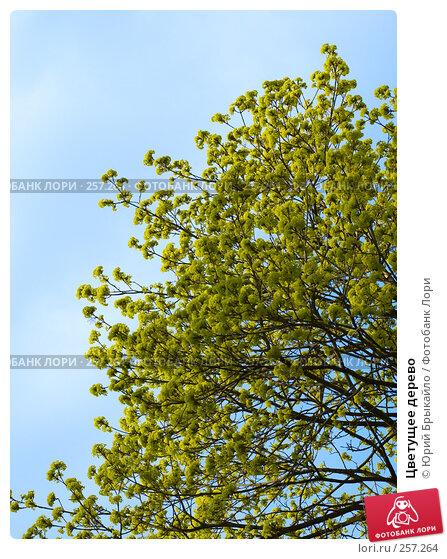 Цветущее дерево, фото № 257264, снято 11 апреля 2008 г. (c) Юрий Брыкайло / Фотобанк Лори