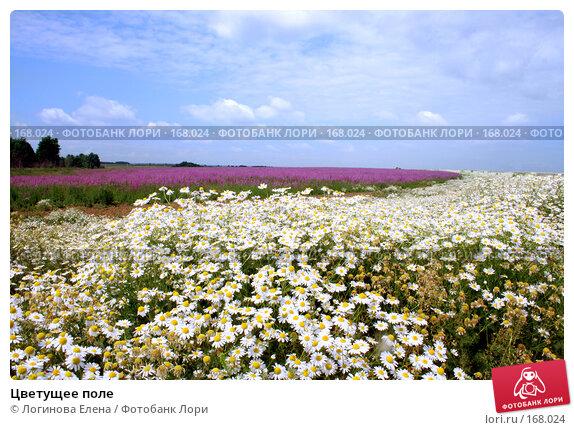 Цветущее поле, фото № 168024, снято 30 июня 2007 г. (c) Логинова Елена / Фотобанк Лори