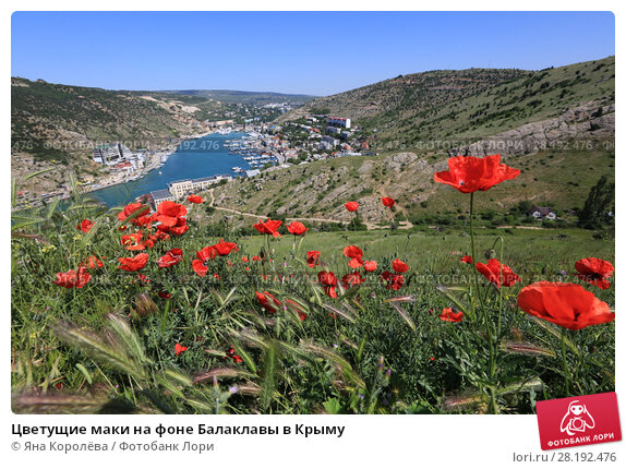 Купить «Цветущие маки на фоне Балаклавы в Крыму», фото № 28192476, снято 30 мая 2017 г. (c) Яна Королёва / Фотобанк Лори
