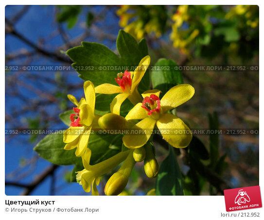 Цветущий куст, фото № 212952, снято 29 апреля 2006 г. (c) Игорь Струков / Фотобанк Лори