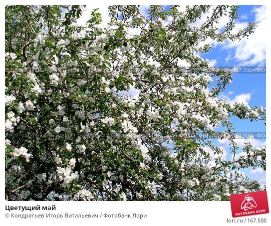 Цветущий май, фото № 167500, снято 20 мая 2007 г. (c) Кондратьев Игорь Витальевич / Фотобанк Лори