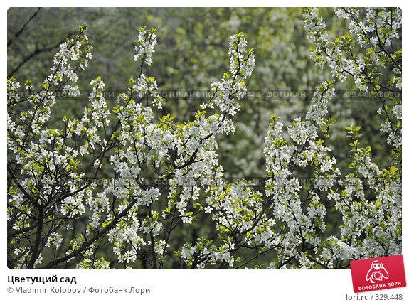 Цветущий сад, фото № 329448, снято 10 мая 2008 г. (c) Vladimir Kolobov / Фотобанк Лори