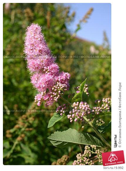 Цветы , фото № 9992, снято 8 августа 2005 г. (c) Останина Екатерина / Фотобанк Лори