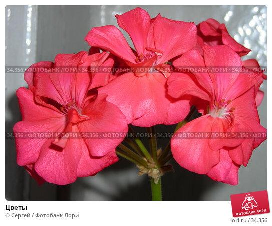 Цветы, фото № 34356, снято 31 марта 2007 г. (c) Сергей / Фотобанк Лори
