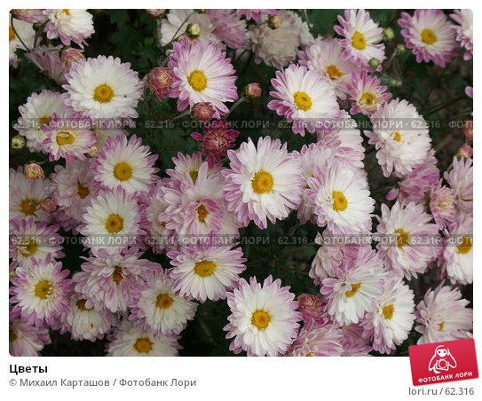 Цветы, эксклюзивное фото № 62316, снято 14 августа 2005 г. (c) Михаил Карташов / Фотобанк Лори