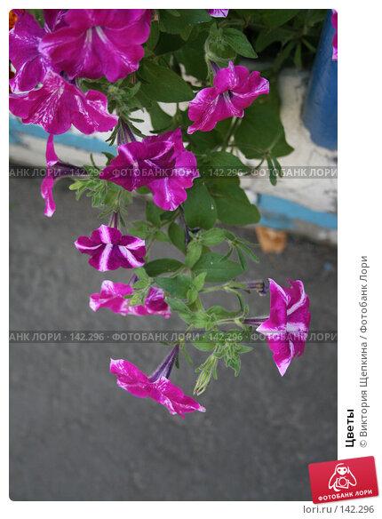 Цветы, фото № 142296, снято 13 августа 2007 г. (c) Виктория Щепкина / Фотобанк Лори