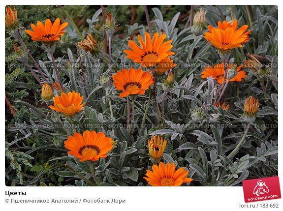 Купить «Цветы», фото № 183692, снято 30 июля 2006 г. (c) Пшеничников Анатолий / Фотобанк Лори