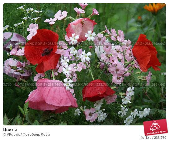 Купить «Цветы», фото № 233760, снято 16 июля 2019 г. (c) VPutnik / Фотобанк Лори