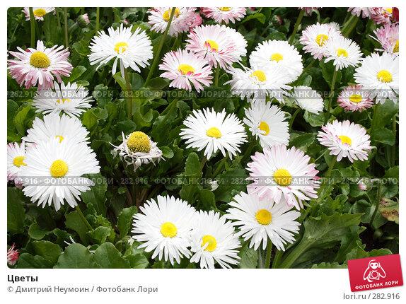 Цветы, эксклюзивное фото № 282916, снято 20 апреля 2008 г. (c) Дмитрий Неумоин / Фотобанк Лори