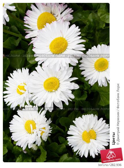 Купить «Цветы», эксклюзивное фото № 282936, снято 20 апреля 2008 г. (c) Дмитрий Нейман / Фотобанк Лори