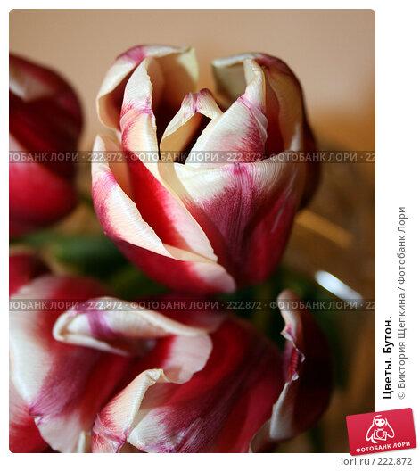 Цветы. Бутон., фото № 222872, снято 10 марта 2008 г. (c) Виктория Щепкина / Фотобанк Лори