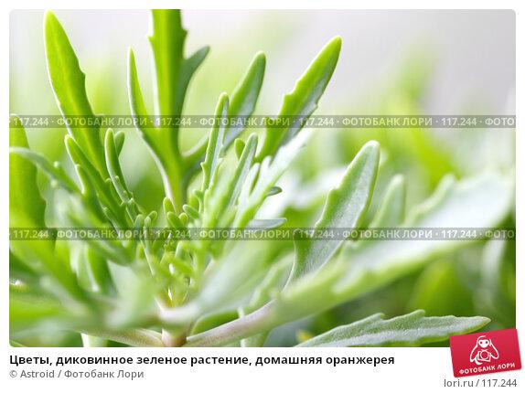 Цветы, диковинное зеленое растение, домашняя оранжерея, фото № 117244, снято 15 июля 2005 г. (c) Astroid / Фотобанк Лори