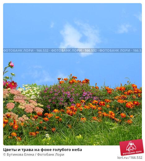Цветы и трава на фоне голубого неба, фото № 166532, снято 17 сентября 2007 г. (c) Бутинова Елена / Фотобанк Лори