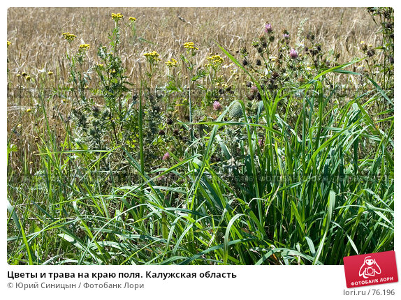 Цветы и трава на краю поля. Калужская область, фото № 76196, снято 11 августа 2007 г. (c) Юрий Синицын / Фотобанк Лори