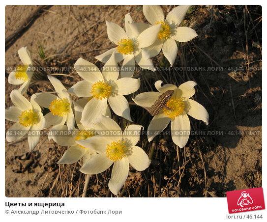 Цветы и ящерица, фото № 46144, снято 21 апреля 2007 г. (c) Александр Литовченко / Фотобанк Лори