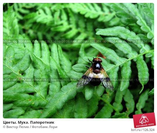 Цветы. Муха. Папоротник, фото № 126324, снято 30 июля 2006 г. (c) Виктор Пелих / Фотобанк Лори
