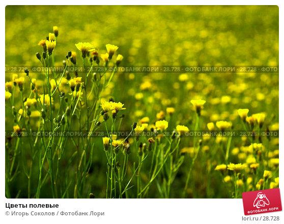 Цветы полевые, фото № 28728, снято 16 октября 2006 г. (c) Игорь Соколов / Фотобанк Лори