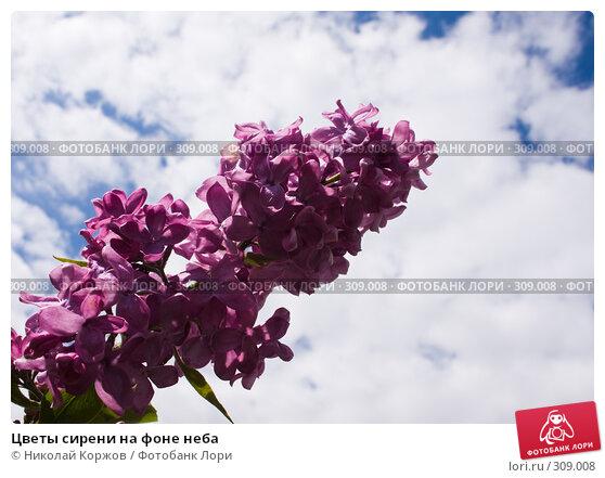 Купить «Цветы сирени на фоне неба», фото № 309008, снято 31 мая 2008 г. (c) Николай Коржов / Фотобанк Лори